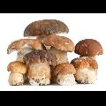 41° COCOFUNGO: Il festival dei funghi nella Marca